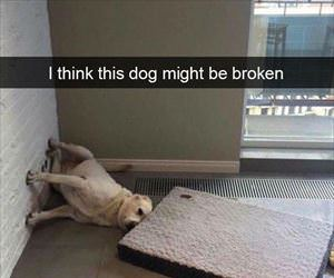 i think this dog might be broken