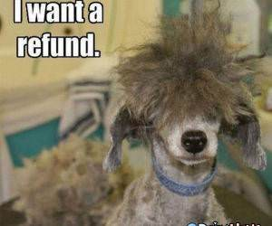 Want A Refund funny picture