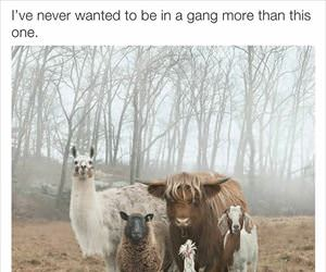 i want to be in a gang