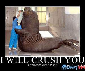 I Will Crush You funny picture