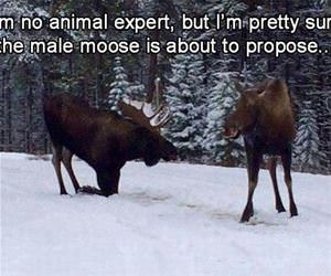 i am no animal expert but funny picture