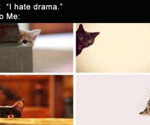 i hate drama but also funny picture