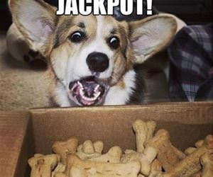 i hit the jackpot funny picture