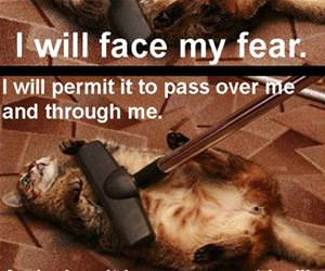 i must not fear funny picture