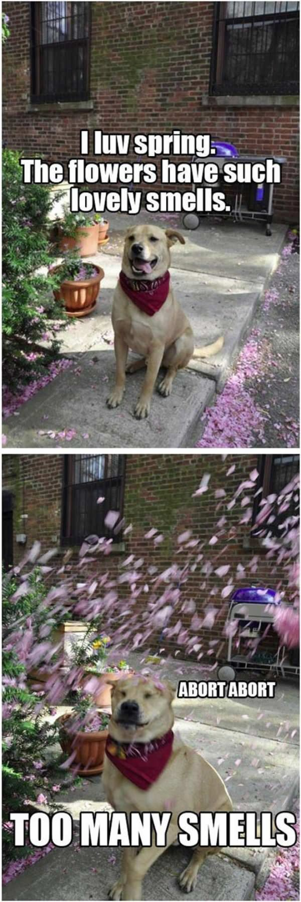 i really love the spring funny picture