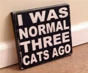 i was normal 3 cats ago funny picture