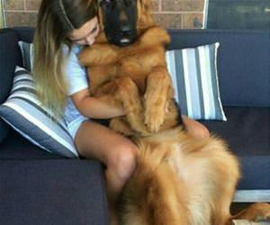 i will always be a lap dog funny picture