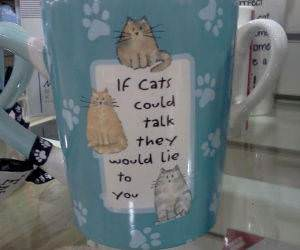 Talking Cats funny picture