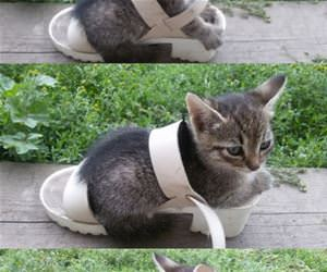 if i fits funny picture