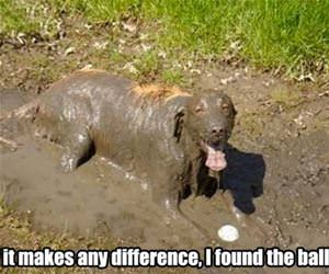 if it makes a difference funny picture