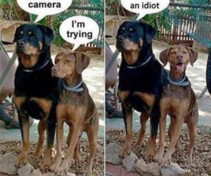 ignore the camera funny picture