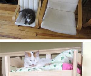 ikea cat furniture funny picture