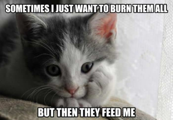 in a cats mind funny picture