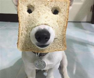 in bread dog funny picture