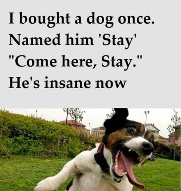 Insane Dog funny picture