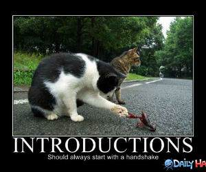Introductions funny pictures