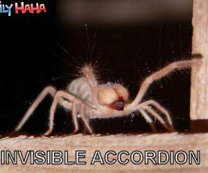 Invisible Accordian Spider