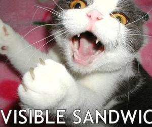 Invisible Sandwich Cat