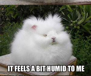 It Is A Tad Humid funny picture