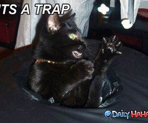 Its A Trap funny picture