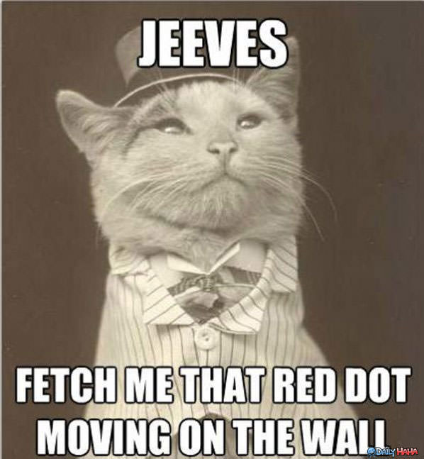 Jeeves funny picture