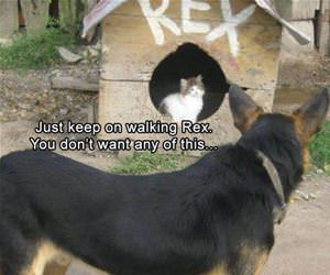 keep walking rex funny picture