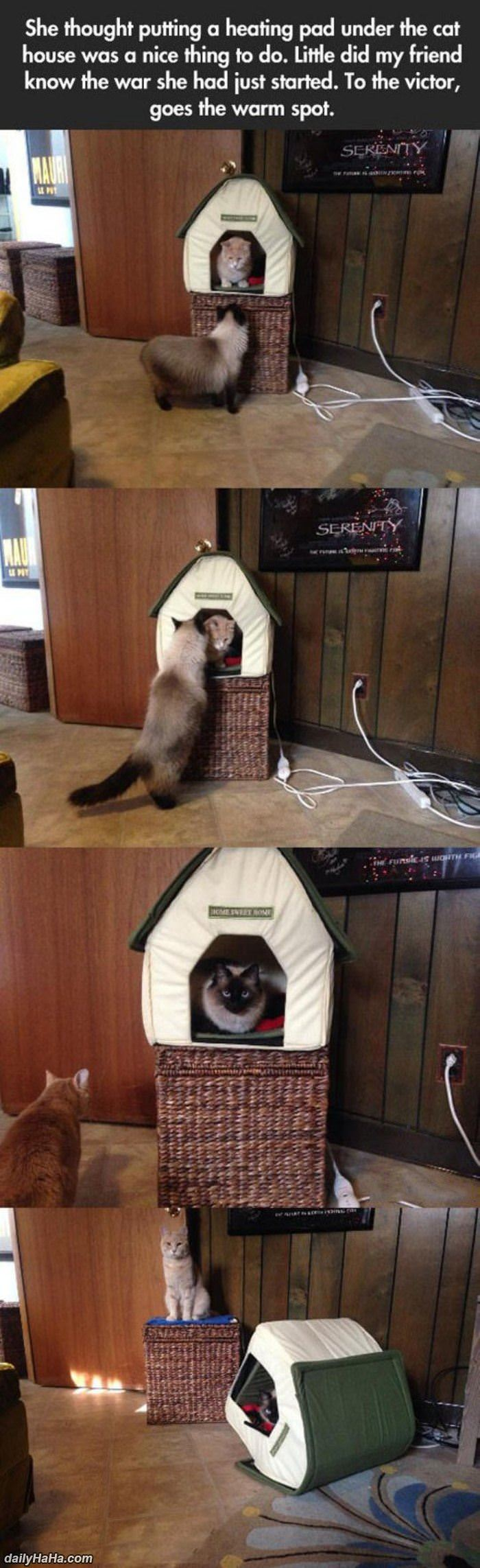 king of the kitty house funny picture