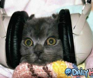 Headphones Cat