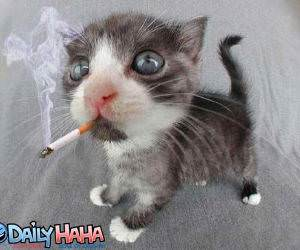 Kitten Smoking