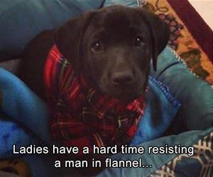 ladies have a hard time resisting funny picture