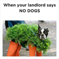 landlord says no dogs