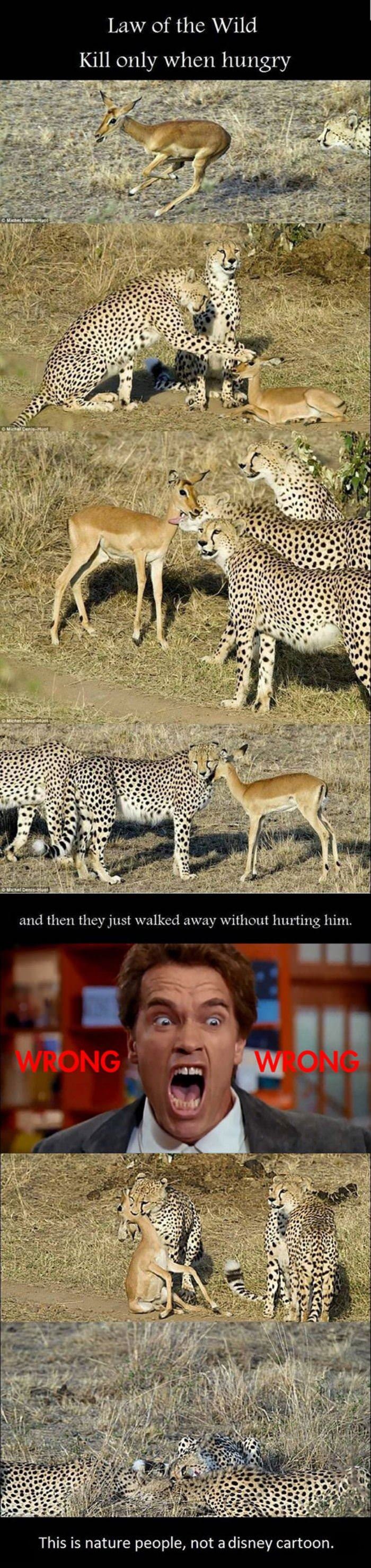law of the wild funny picture