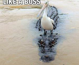 Like a Boss funny picture