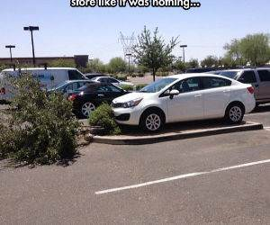 like a boss parking only funny picture