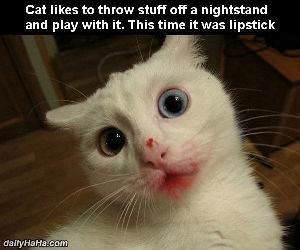lipstick cat funny picture