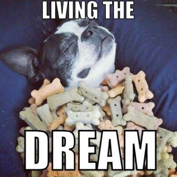 living the dream funny picture