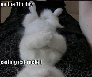 Lolcat Compilation funny pictures