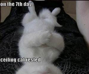 Another LolCat Compilation funny picture