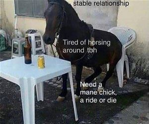 looking for a stable relationship funny picture