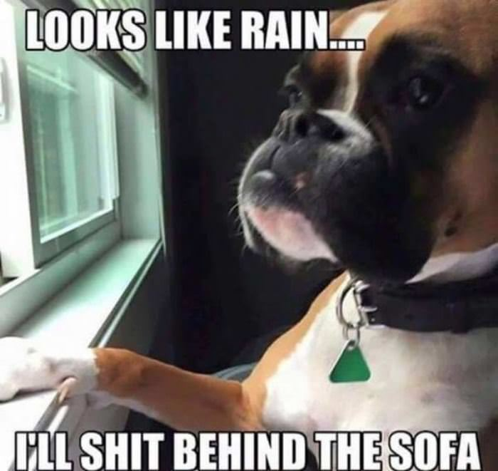 Looks Like Rain Funny Picture