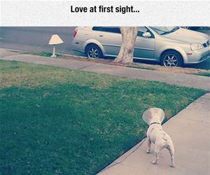 love at first sight funny picture