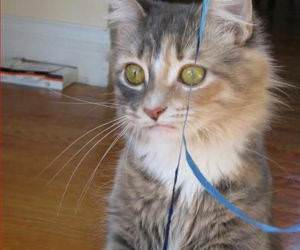 MAi Party funny picture