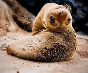 marine animals are flexible funny picture