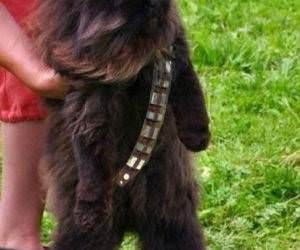 Mewbacca funny picture