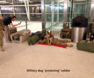Military Dog funny picture