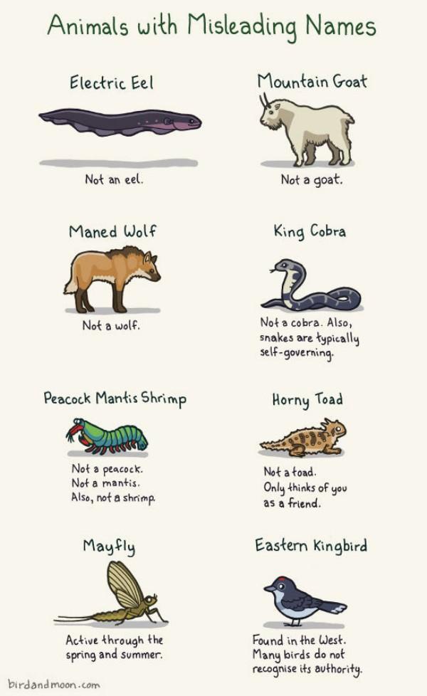 cafechoo   image   weird animal names