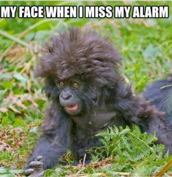 Miss My Alarm funny picture