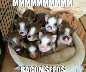 mmmmmm bacon seeds funny picture