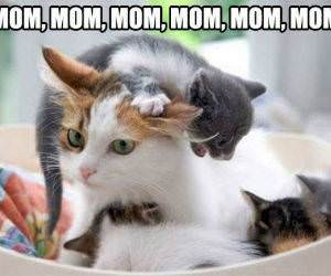 Mom Mom Mom Mom funny picture