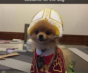mom got a pope costume for the dog funny picture